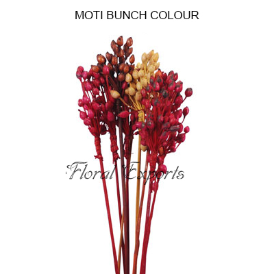 Moti Bunch Colour on Stick - Wholesale Decorative Bunches