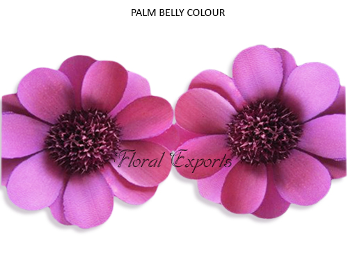 Palm Belly Colour - Wholesale Palm Belly Flowers