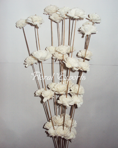 Sola Beli 2cm on Coco Stick - Decorattive Sola Sticks Wholesale