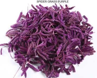 Spider grass Purple - Dried Decorative Grass Wholesale