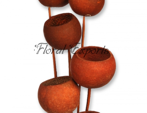 Bell Cup Brown on Stem 6pcs Bunch