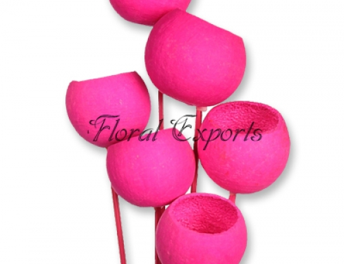 Bell Cup Magenta on Stick 6pcs Bunch