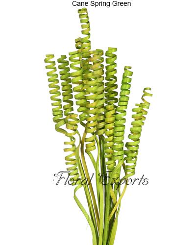 Cane Spring Green