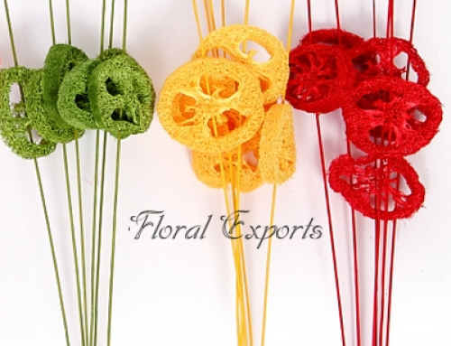 LUFFA SLICE ON STICK ASSORTED COLOUR