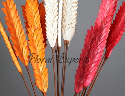 SOLA CHIPS PINE FLAT 60CM ASSORTED COLOR
