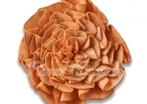Sola Dahlia Flat 8cm Color