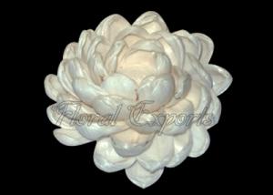 Sola Dahlia Special 10cm Natural - Bulk Dahlia Flowers Suppliers