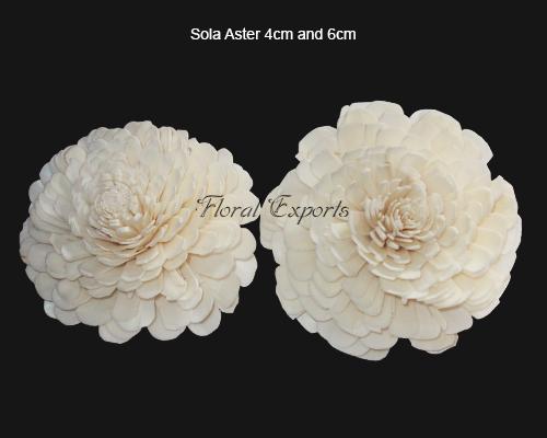 Sola Aster 4cm & 6cm Natural - Sola Belli Flowers Manufacturer