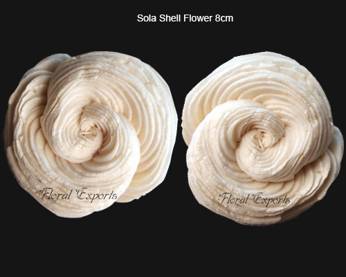 Sola Shell Flowers 8cm Natural - Sola Flowers Wholesale Supplies