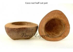 Coconut half cut pot - Coconut half cut pot - Safe fun bird toys Wholesale