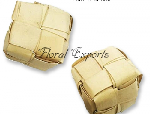 Palm Leaf Box – Bird Toy Wholesale